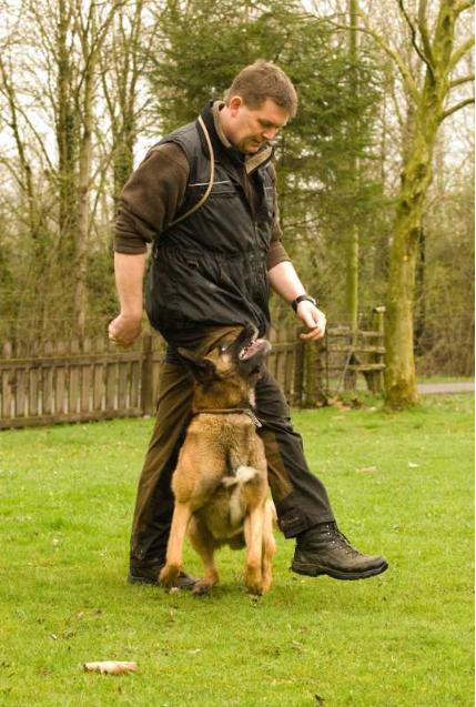 Dog Center Bergerland Nordkirchen - Polizeihunde Spezialtraining