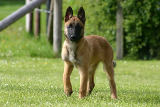 Dog Center Bergerland Nordkirchen - Hundepension, Hundeschule, Spezialhunde