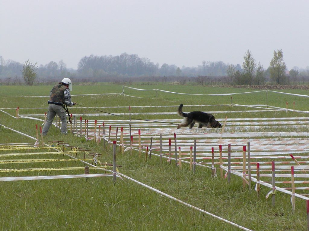 Dog Center Bergerland Nordkirchen - Spezialhunde - Sprengstoffspürhund Training