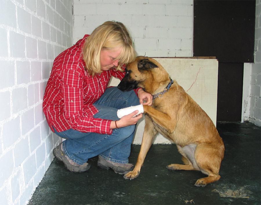 Hundepension Bergerland Nordkirchen - Medizinische Betreuung