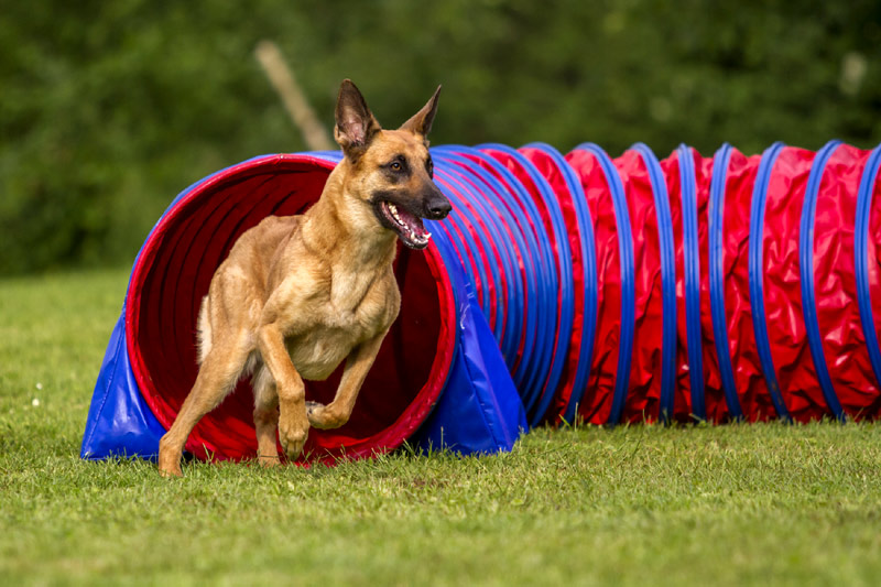 Dog Center Bergerland Nordkirchen - Hundepension, Hundeschule - Malinois Training