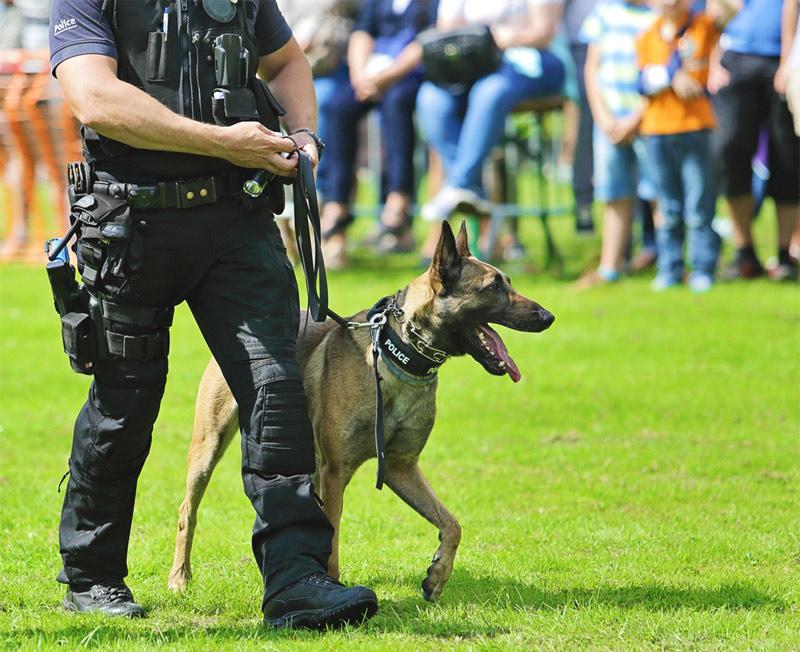 Hundeschule Bergerland Nordkirchen - Sprengstoffspürhunde, Polizeihunde, Spezialhunde